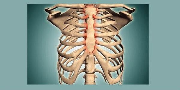 Sụn sườn là phần sụn được lấy từ phần xương sườn của cơ thể