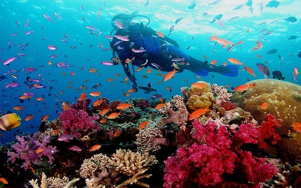 Lặn san hô tại Phú Quốc